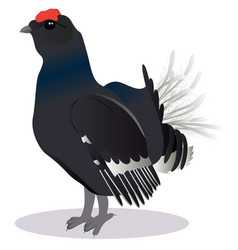 blackcock bird vector image