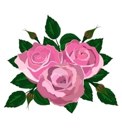 Bouquet of pink roses on a white background vector