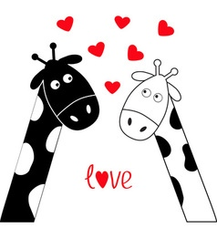 Cute cartoon black white giraffe boy and girl vector image