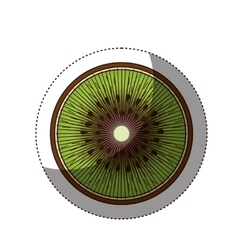 Delicious kiwi fruit isolated icon vector