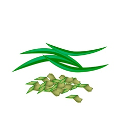 Fresh Pandan Leaves on A White Background vector image