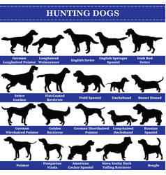 hunting dogs silhouettes vector image