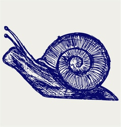 Snail sketch vector image