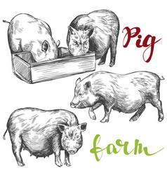 farm pig set hand drawn vector image