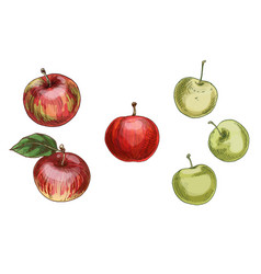 with different apples red and green isolated vector image