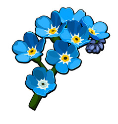Beautiful cut flowers blue color myosotis arvensis vector