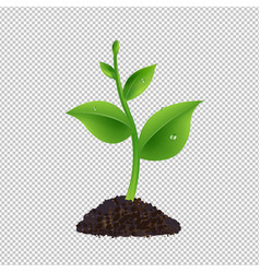 green sprout with transparent background vector image