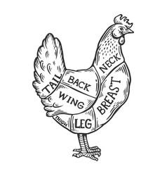 Meat diagram chicken engraving vector