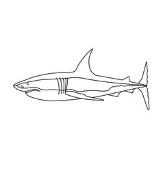 predatory fish shark vector image