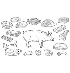 severed big body parts and meat cuts in colorless vector image
