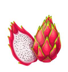 Whole and half red pitaya fruits vector