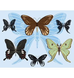 Butterfly set vector image vector image