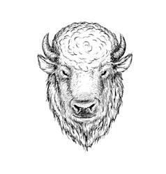 head of buffalo vector image