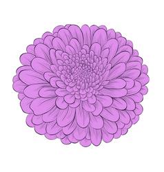 Flower chrysanthemum isolated on white vector