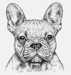 Highly detailed hand drawn french bulldog i vector