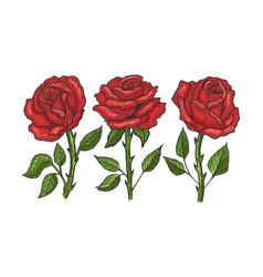 rose flower sketch engraving vector image