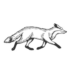 running fox animal engraving vector image