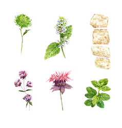 Set watercolor various flowers on white vector