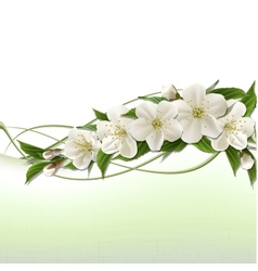 Spring background with white cherry flowers vector image
