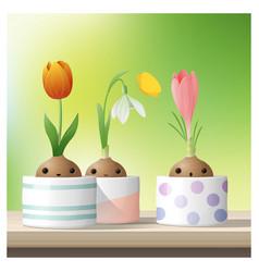 hello spring flower with crocus tulip snowdrop vector image vector image