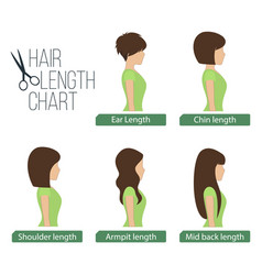 hair length chart side view vector image vector image