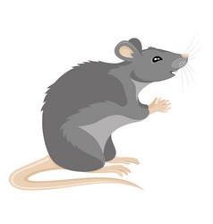cute gray rat vector image