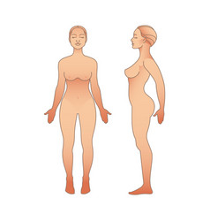 female body front and side view template isolated vector image