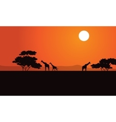 Zebra at afternoon scenery vector image