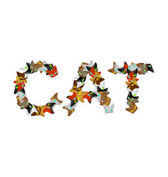cat sign text letters of cats pet font home vector image