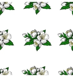 Seamless pattern flowers and leaves of the apple vector image