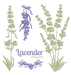 Set of silhouettes of lavender flowers vector image