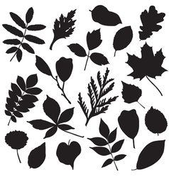 collection leaves silhouettes vector image