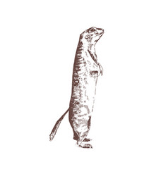 Ground squirrel hand drawn with contour lines vector