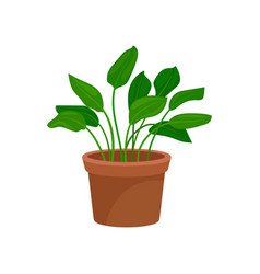 Leafy home decorative plant houseplant for vector