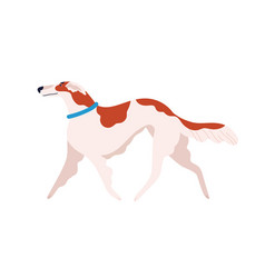 russian canine greyhound dog breed flat vector image