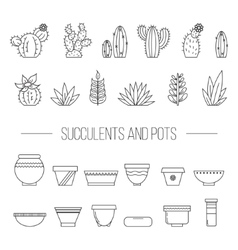 Set of succulent plants cactuses and potsLinear vector