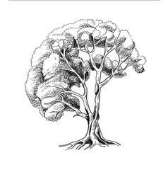 tree sketch engraving vector image