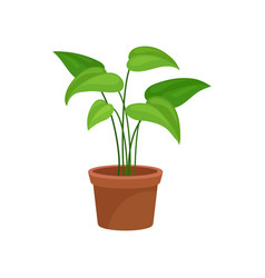 Home decorative plant greren houseplant for vector