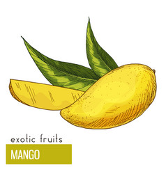Mango with leaves vector