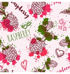 raspberry and splashes in watercolor style vector image