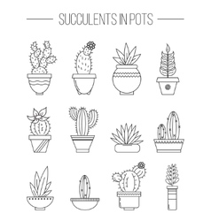 Set of succulent plants and cactuses in pots vector