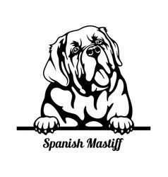 Spanish mastiff peeking dog - head isolated on vector