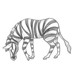 Zebra eating grass herbivore animal monochrome vector