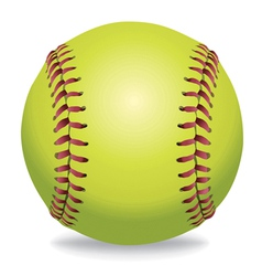 softball isolated on white vector image vector image