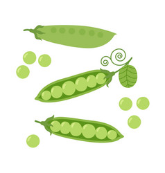 cartoon green peas vector image