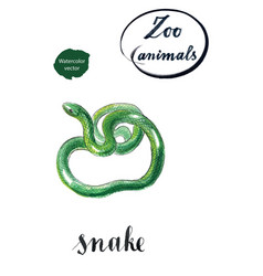 green coiled snake vector image