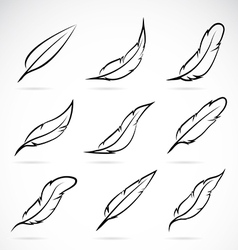 Group feather vector