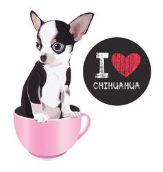 I love chihuahua vector
