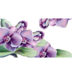 orchid flowers watercolor frame spring vector image