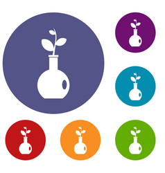 Plant in a vase icons set vector